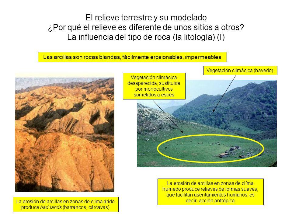 Las arcillas son rocas blandas, fácilmente erosionables, impermeables