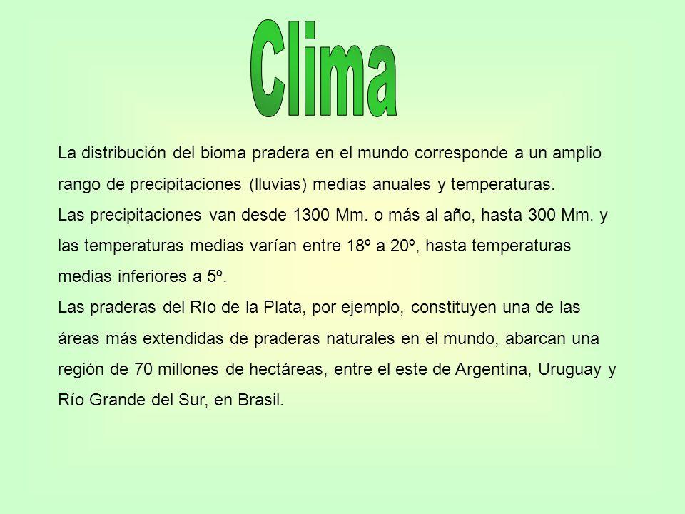 Clima La distribución del bioma pradera en el mundo corresponde a un amplio. rango de precipitaciones (lluvias) medias anuales y temperaturas.