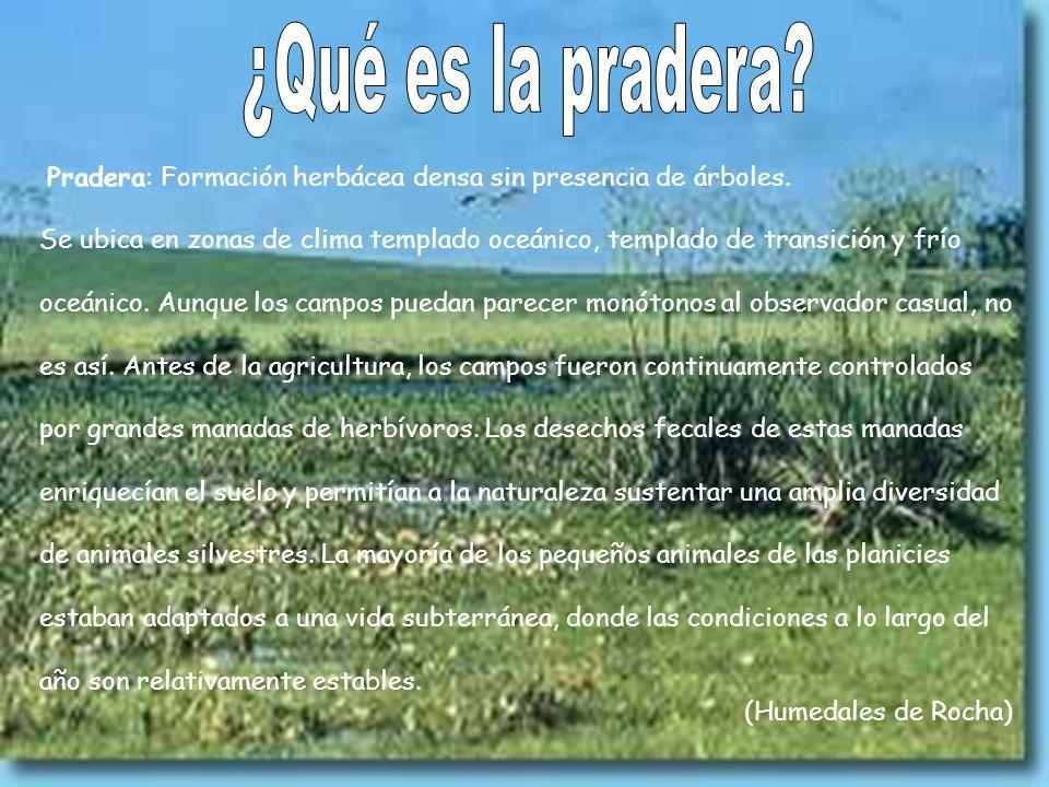 ¿Qué es la pradera Pradera: Formación herbácea densa sin presencia de árboles.