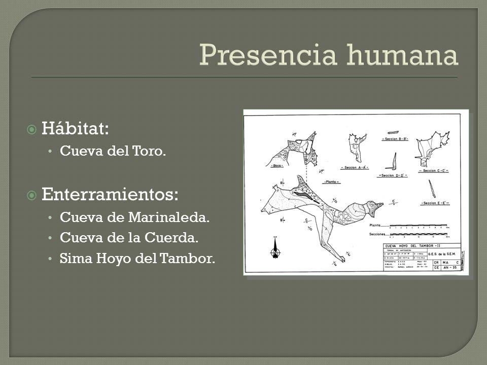 Presencia humana Hábitat: Enterramientos: Cueva del Toro.