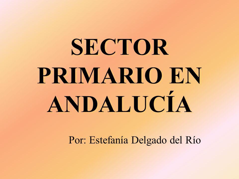 SECTOR PRIMARIO EN ANDALUCÍA