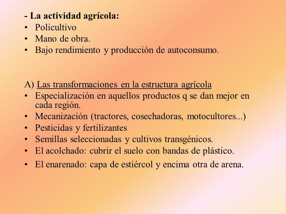 - La actividad agrícola: