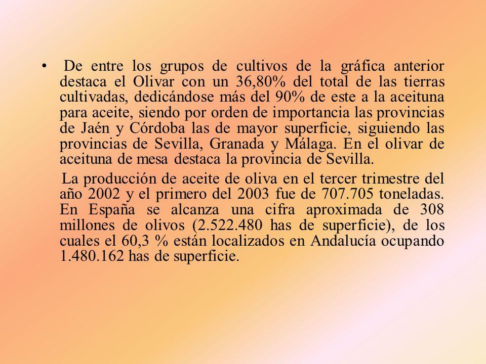 De entre los grupos de cultivos de la gráfica anterior destaca el Olivar con un 36,80% del total de las tierras cultivadas, dedicándose más del 90% de este a la aceituna para aceite, siendo por orden de importancia las provincias de Jaén y Córdoba las de mayor superficie, siguiendo las provincias de Sevilla, Granada y Málaga. En el olivar de aceituna de mesa destaca la provincia de Sevilla.