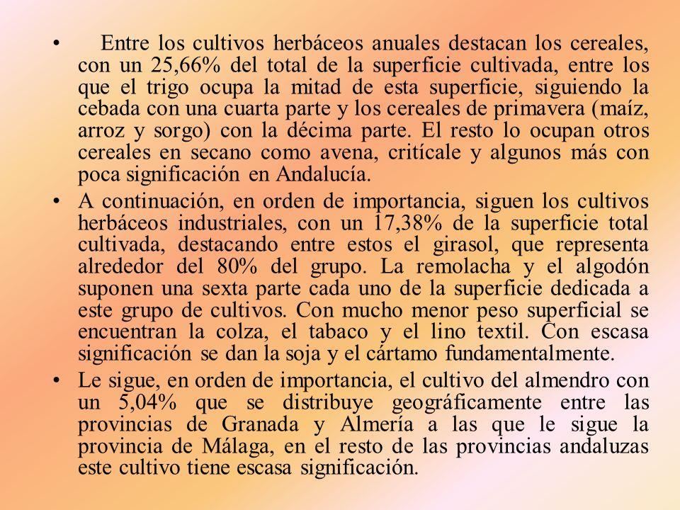 Entre los cultivos herbáceos anuales destacan los cereales, con un 25,66% del total de la superficie cultivada, entre los que el trigo ocupa la mitad de esta superficie, siguiendo la cebada con una cuarta parte y los cereales de primavera (maíz, arroz y sorgo) con la décima parte. El resto lo ocupan otros cereales en secano como avena, critícale y algunos más con poca significación en Andalucía.