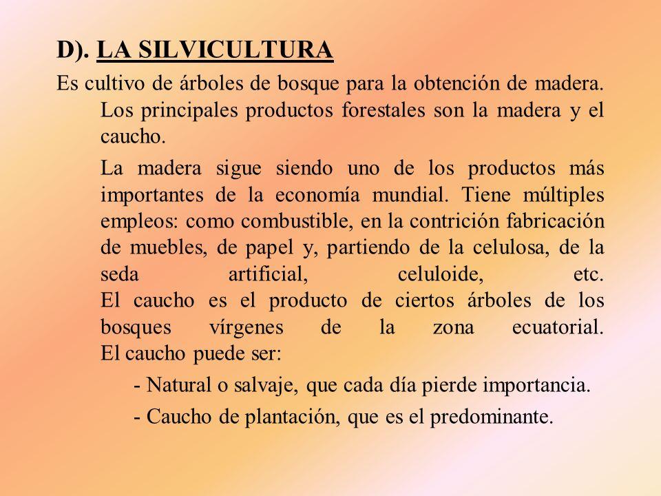 D). LA SILVICULTURA Es cultivo de árboles de bosque para la obtención de madera. Los principales productos forestales son la madera y el caucho.