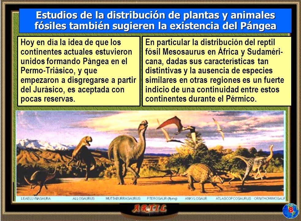 Estudios de la distribución de plantas y animales fósiles también sugieren la existencia del Pángea