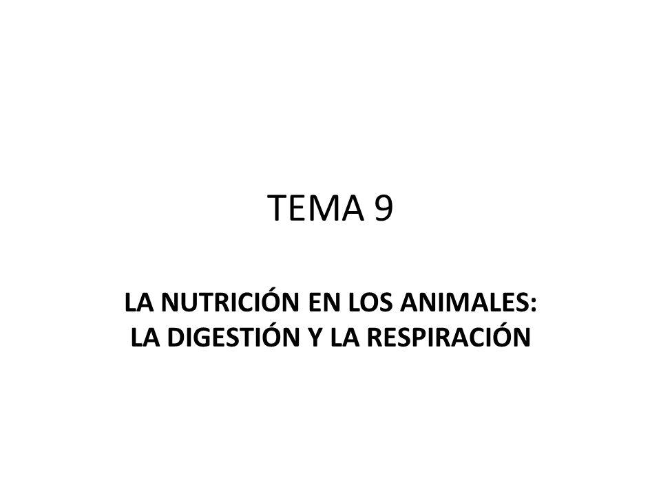 LA NUTRICIÓN EN LOS ANIMALES: LA DIGESTIÓN Y LA RESPIRACIÓN