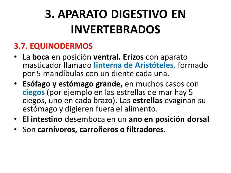 3. APARATO DIGESTIVO EN INVERTEBRADOS