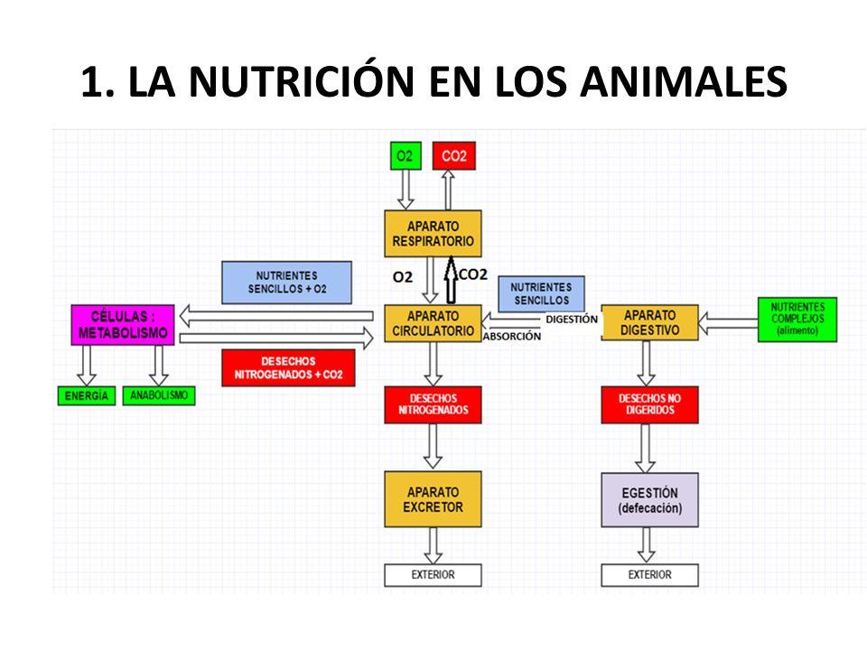 1. LA NUTRICIÓN EN LOS ANIMALES