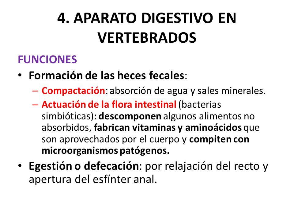 4. APARATO DIGESTIVO EN VERTEBRADOS