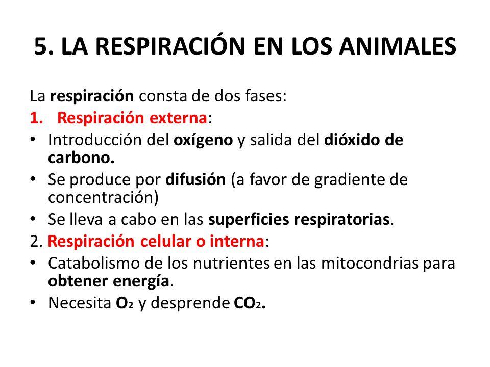 5. LA RESPIRACIÓN EN LOS ANIMALES