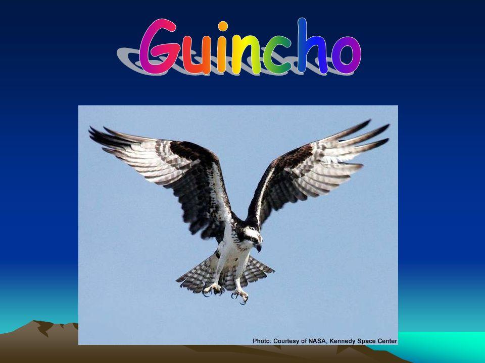 Guincho