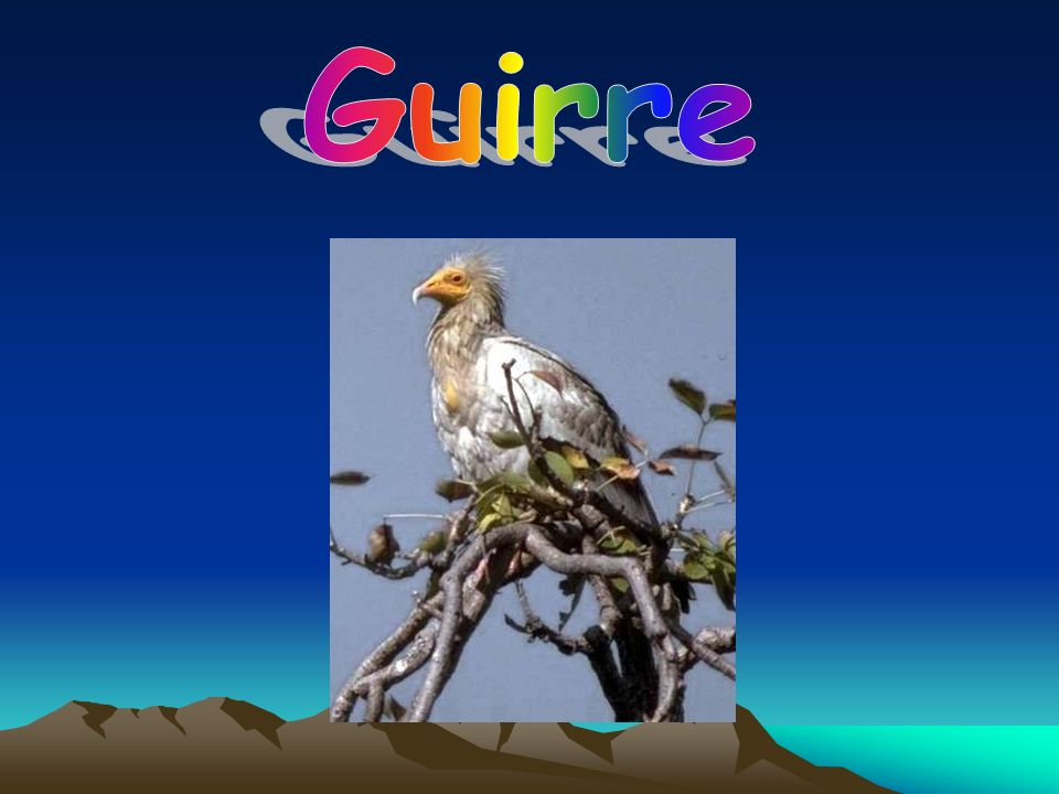 Guirre