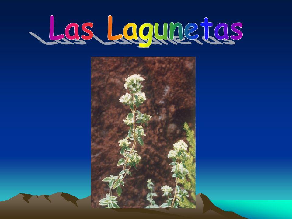 Las Lagunetas
