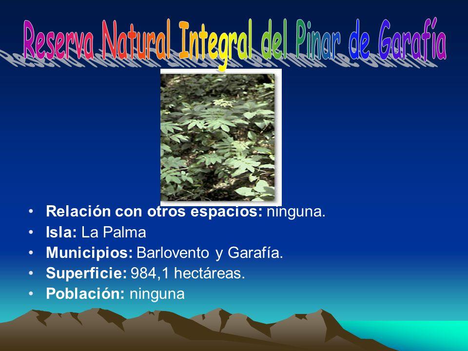 Reserva Natural Integral del Pinar de Garafía