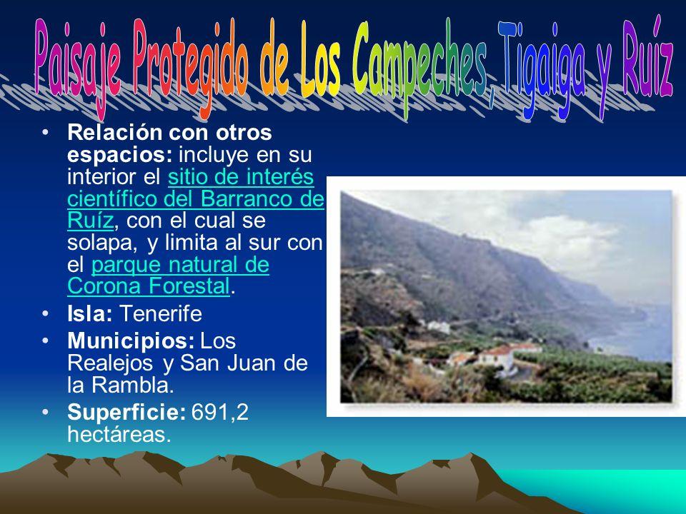 Paisaje Protegido de Los Campeches,Tigaiga y Ruíz