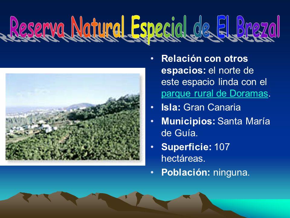 Reserva Natural Especial de El Brezal