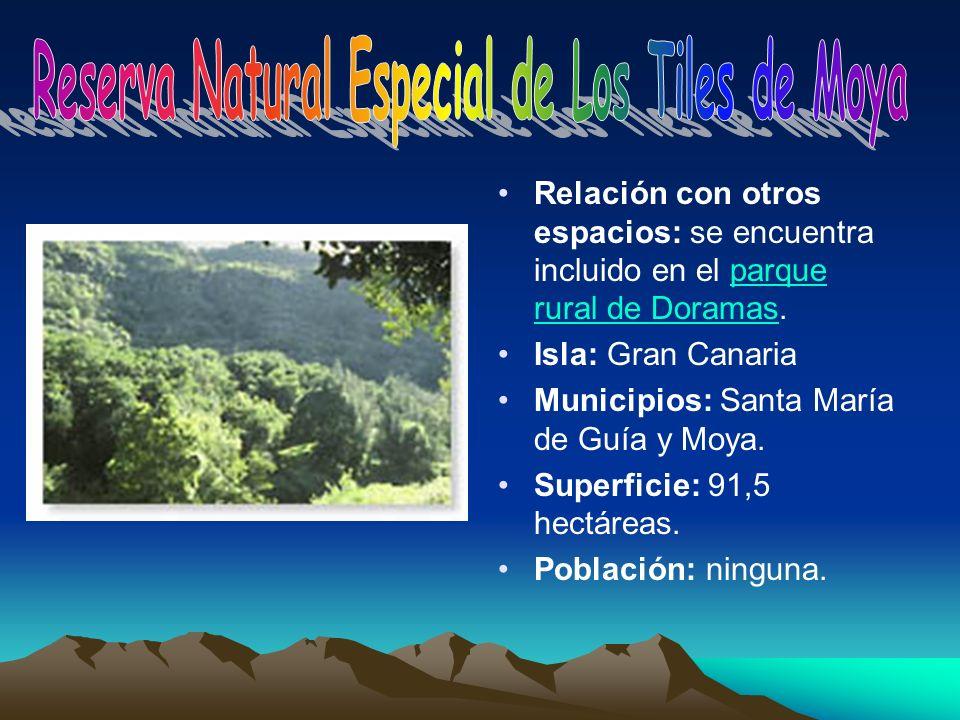 Reserva Natural Especial de Los Tiles de Moya