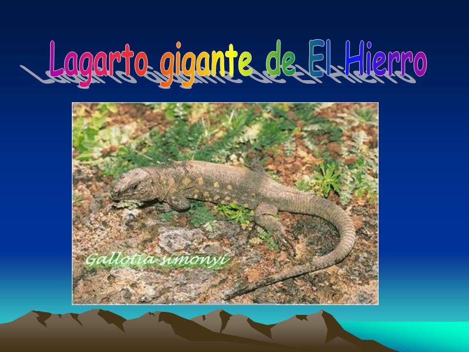 Lagarto gigante de El Hierro