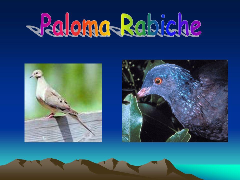 Paloma Rabiche