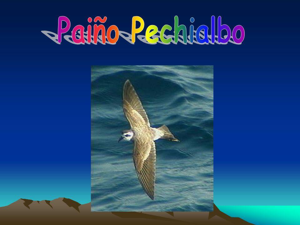 Paiño Pechialbo