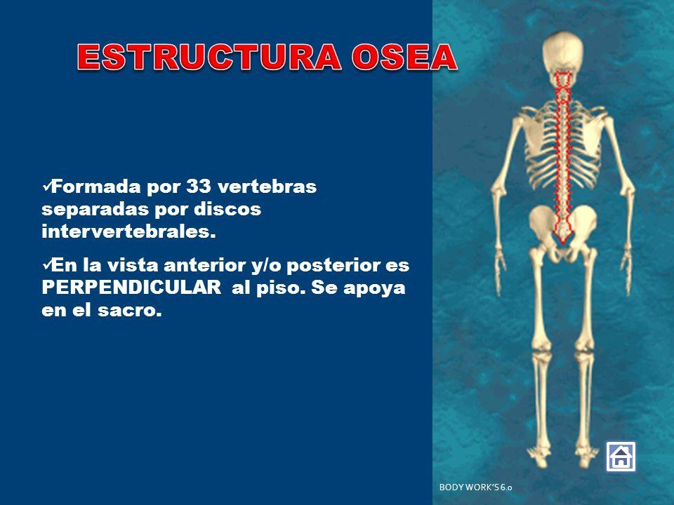 ESTRUCTURA OSEA Formada por 33 vertebras separadas por discos intervertebrales.