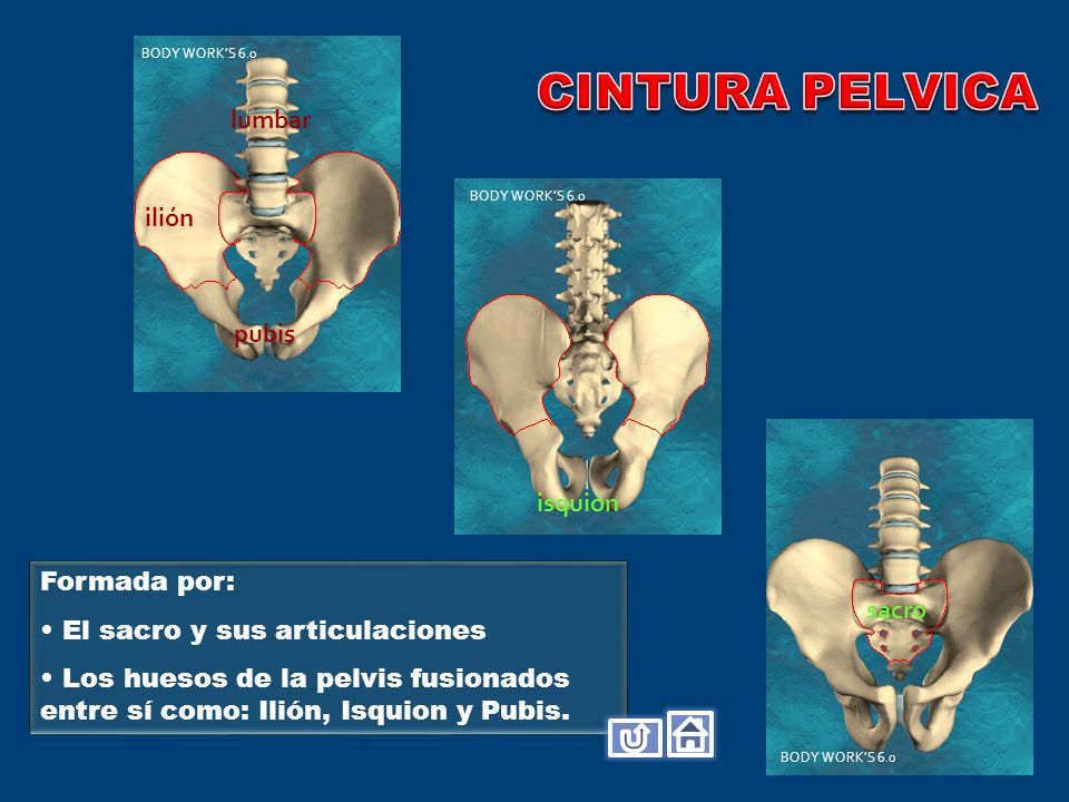 CINTURA PELVICA lumbar ilión pubis isquión Formada por: