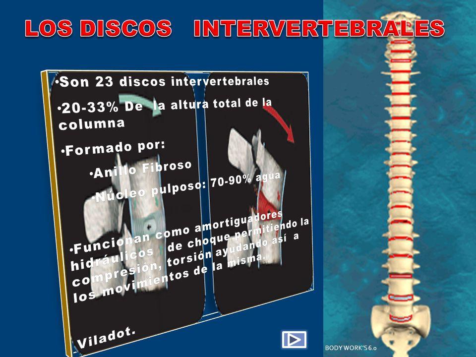 LOS DISCOS INTERVERTEBRALES
