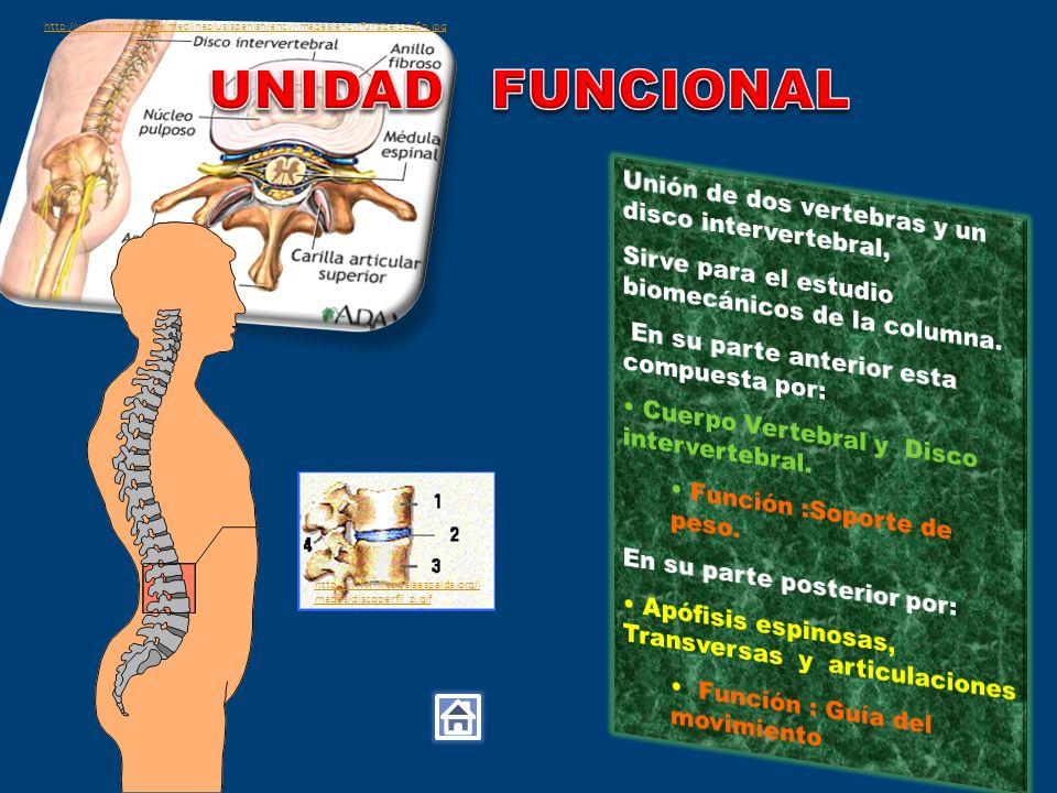 UNIDAD FUNCIONAL Unión de dos vertebras y un disco intervertebral,