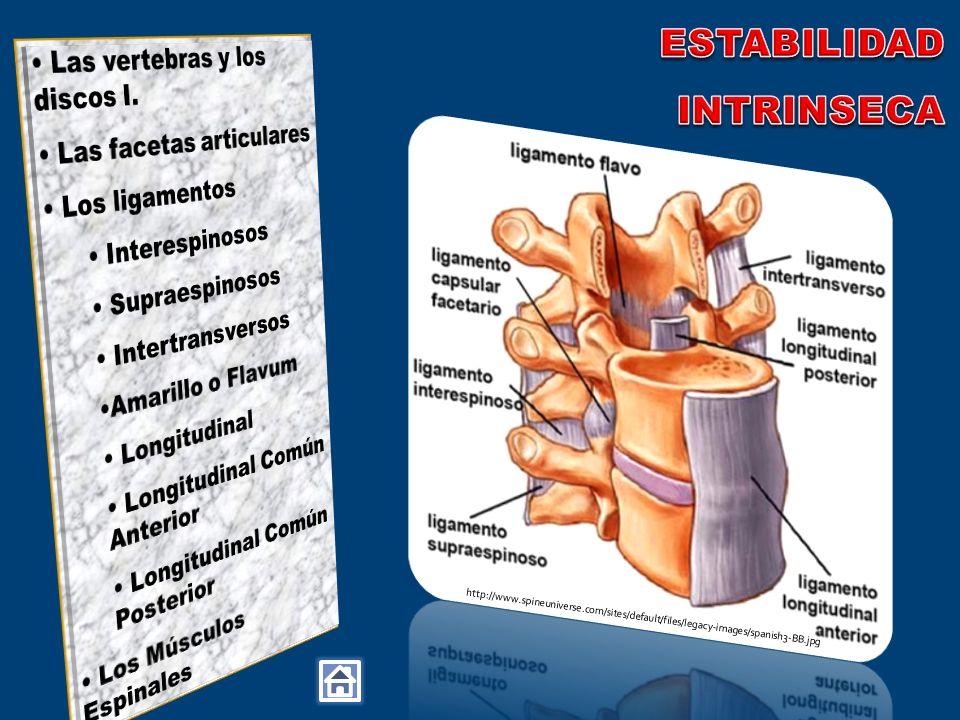 ESTABILIDAD INTRINSECA Las vertebras y los discos I.