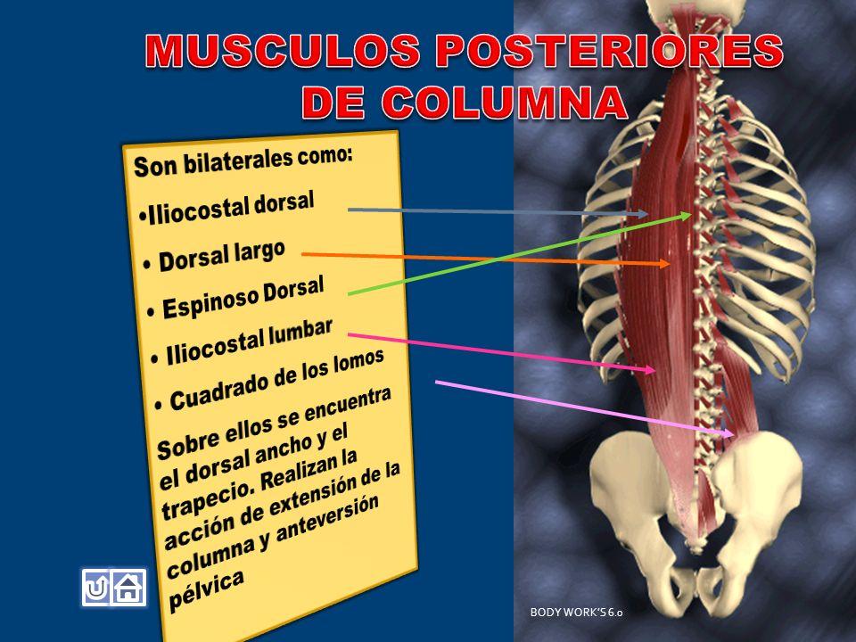 MUSCULOS POSTERIORES DE COLUMNA