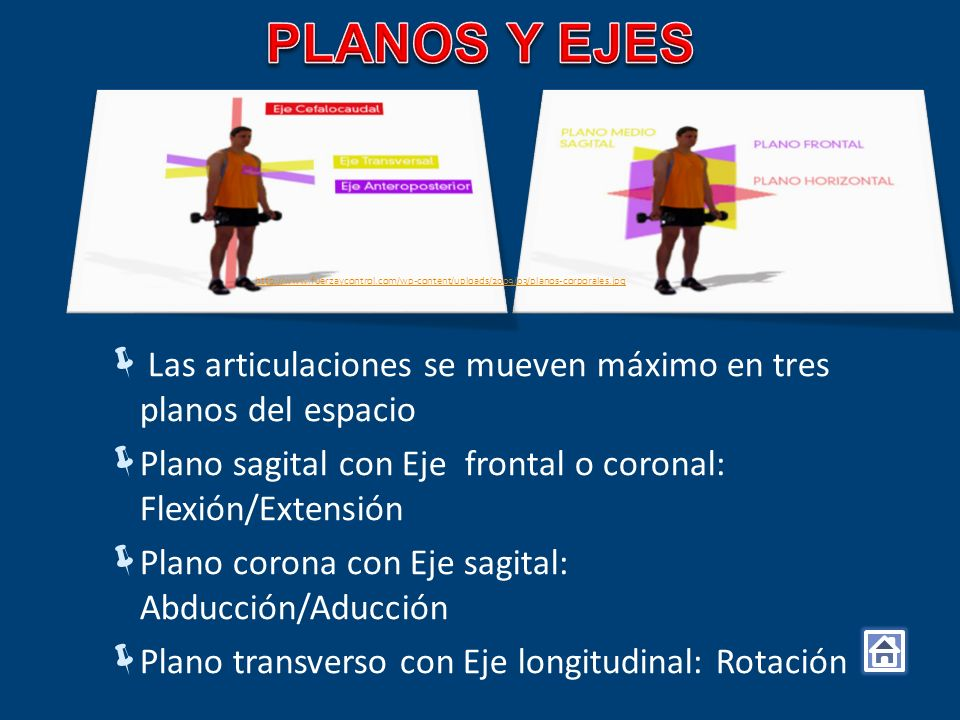 PLANOS Y EJES http://www.fuerzaycontrol.com/wp-content/uploads/2009/03/planos-corporales.jpg.