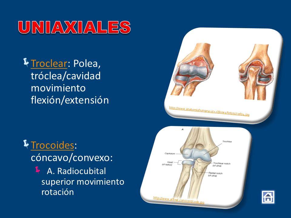 UNIAXIALES Troclear: Polea, tróclea/cavidad movimiento flexión/extensión. Trocoides: cóncavo/convexo: