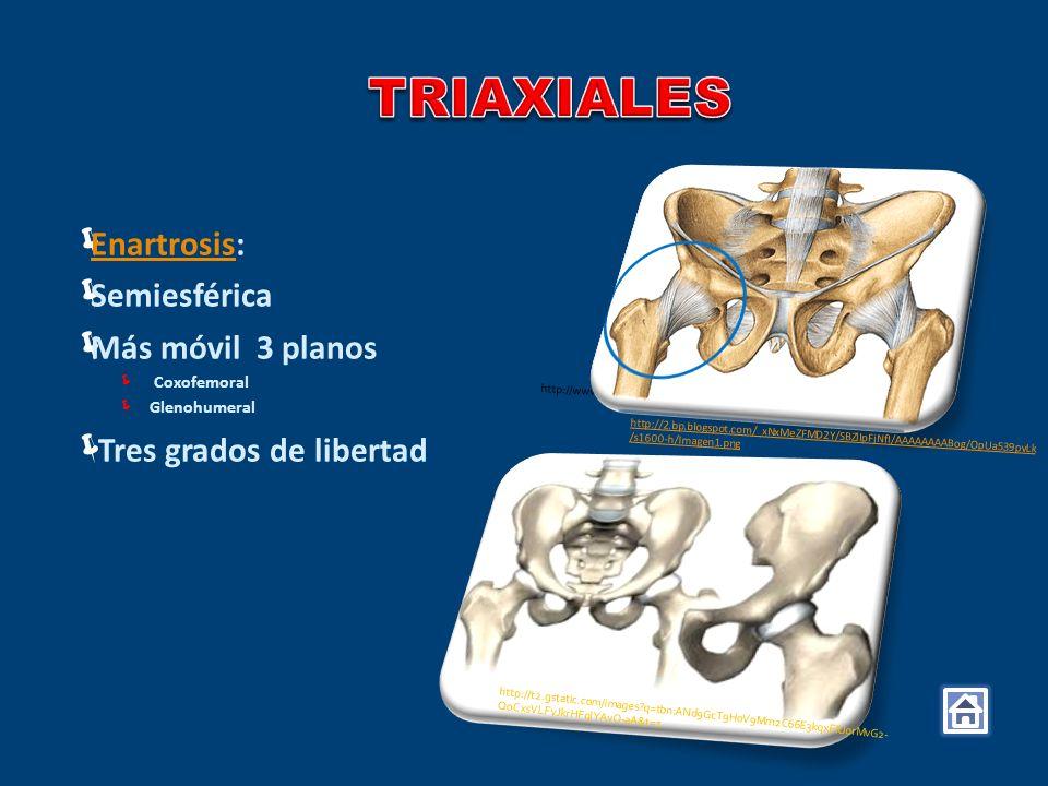 TRIAXIALES Enartrosis: Semiesférica Más móvil 3 planos