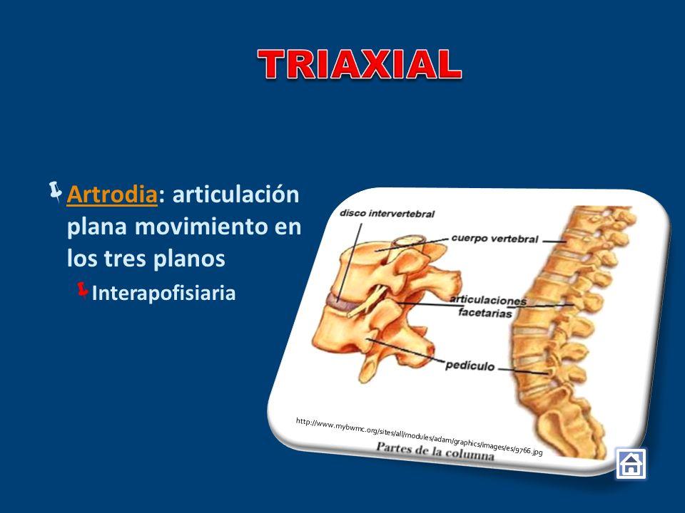TRIAXIAL Artrodia: articulación plana movimiento en los tres planos