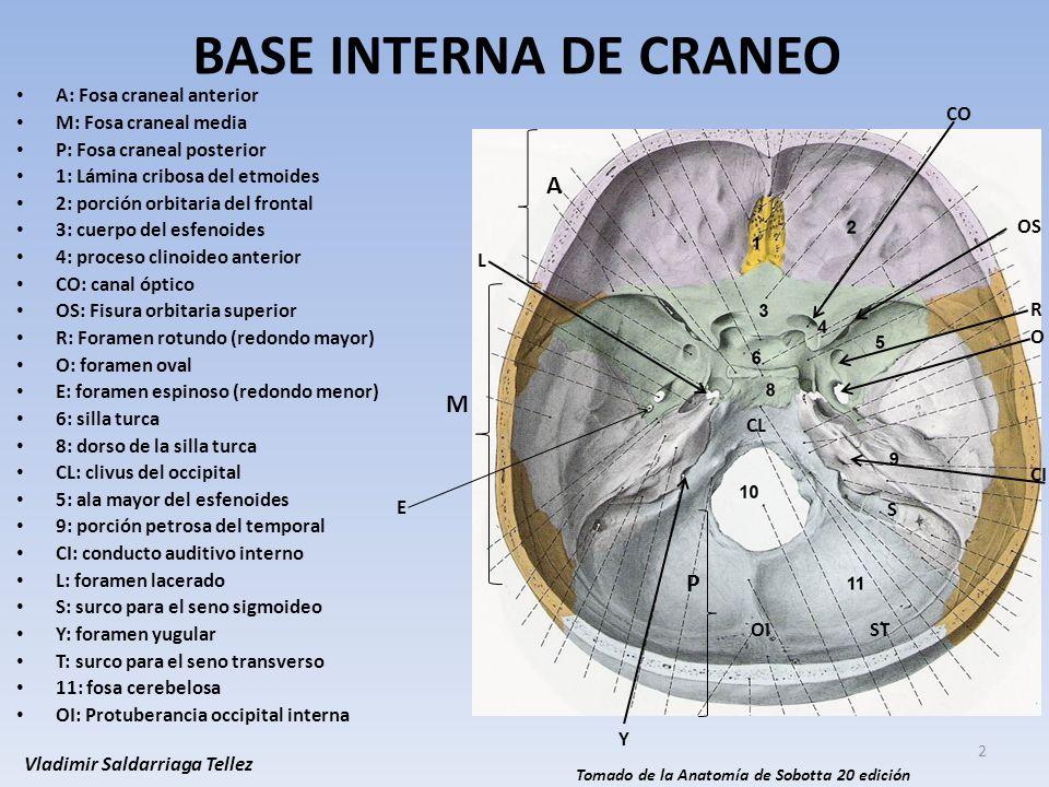 Bonito Anatomía Posterior Fosa Craneal Componente - Anatomía de Las ...
