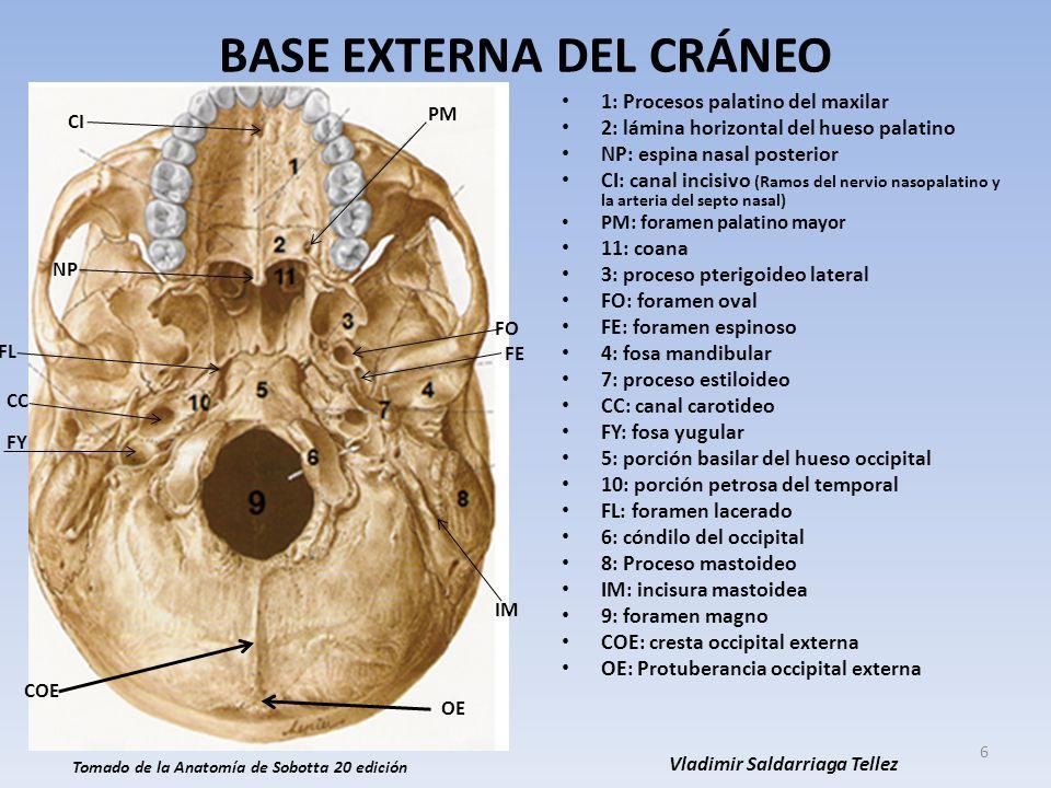 Dorable Vídeo De La Anatomía Del Cráneo Imagen - Anatomía de Las ...
