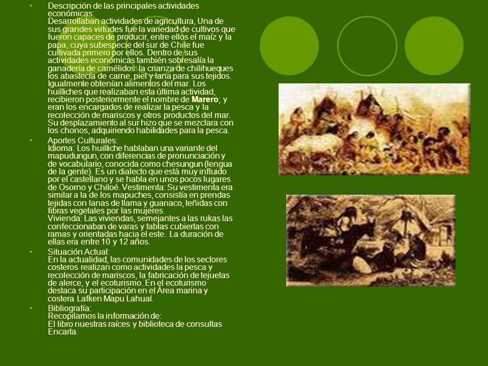 Descripción de las principales actividades económicas: Desarrollaban actividades de agricultura, Una de sus grandes virtudes fue la variedad de cultivos que fueron capaces de producir, entre ellos el maíz y la papa, cuya subespecie del sur de Chile fue cultivada primero por ellos. Dentro de sus actividades económicas también sobresalía la ganadería de camélidos: la crianza de chilihueques los abastecía de carne, piel y lana para sus tejidos. Igualmente obtenían alimentos del mar. Los huilliches que realizaban esta última actividad, recibieron posteriormente el nombre de Marero; y eran los encargados de realizar la pesca y la recolección de mariscos y otros productos del mar. Su desplazamiento al sur hizo que se mezclara con los chonos, adquiriendo habilidades para la pesca.