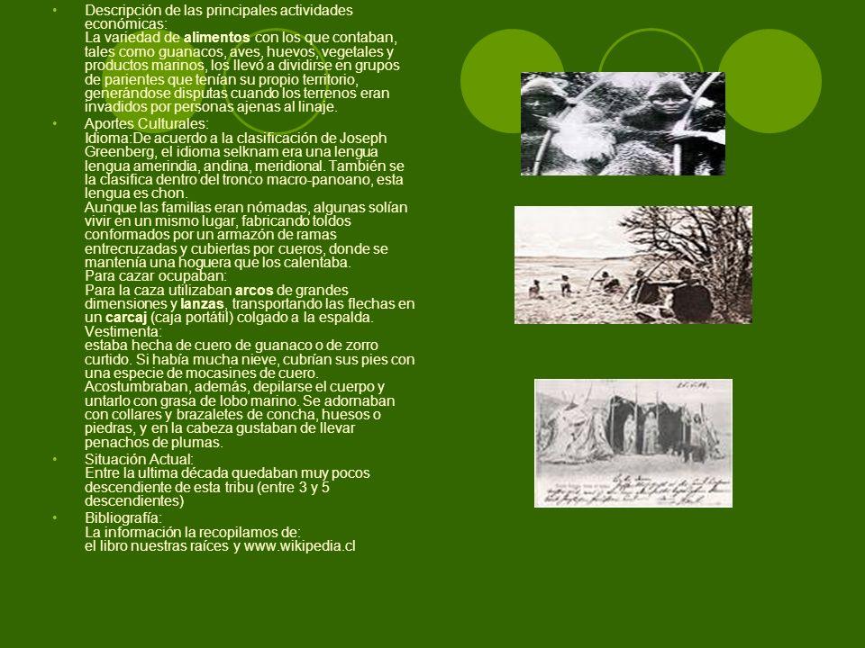 Descripción de las principales actividades económicas: La variedad de alimentos con los que contaban, tales como guanacos, aves, huevos, vegetales y productos marinos, los llevó a dividirse en grupos de parientes que tenían su propio territorio, generándose disputas cuando los terrenos eran invadidos por personas ajenas al linaje.