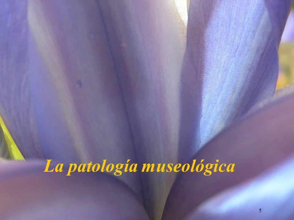 La patología museológica
