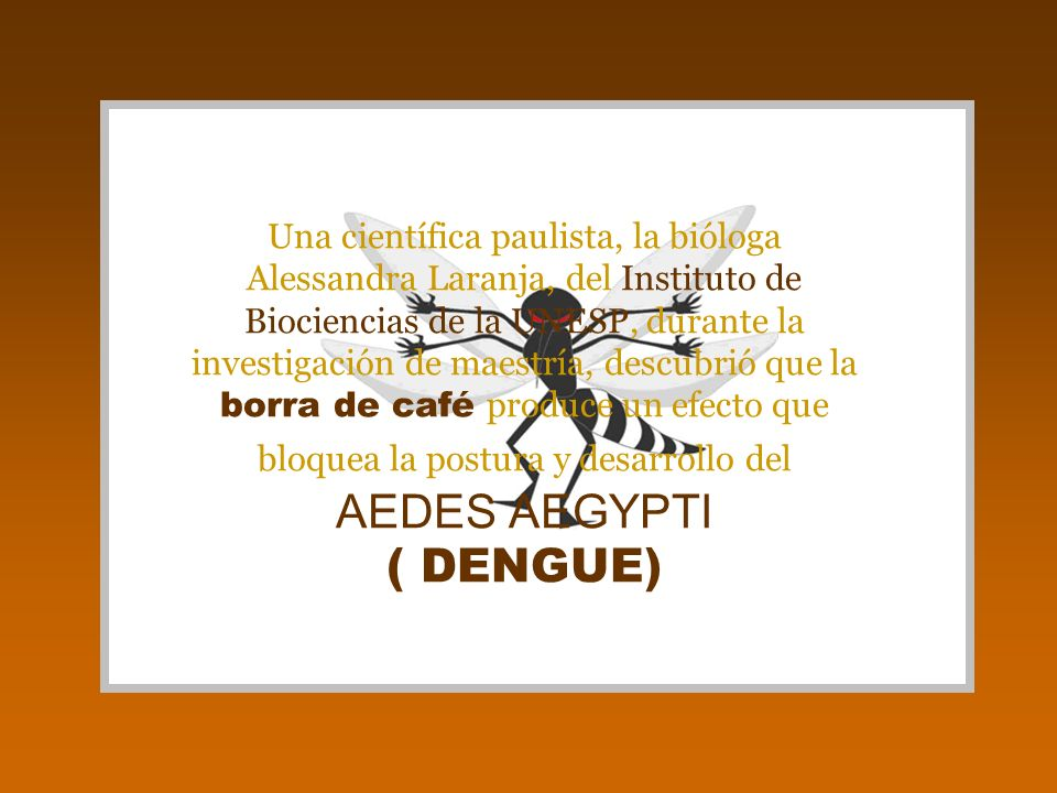 Una científica paulista, la bióloga Alessandra Laranja, del Instituto de Biociencias de la UNESP, durante la investigación de maestría, descubrió que la borra de café produce un efecto que bloquea la postura y desarrollo del AEDES AEGYPTI ( DENGUE)