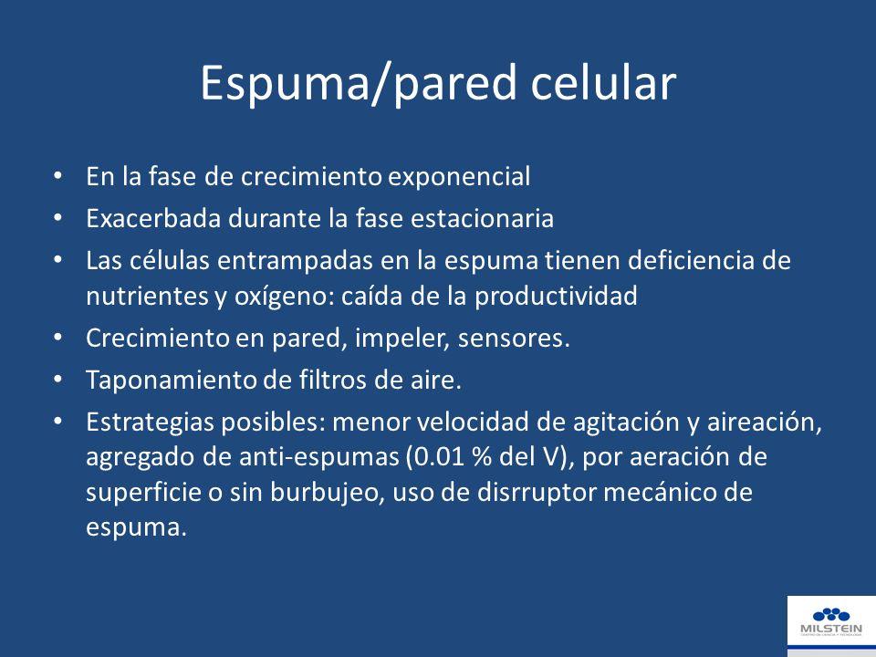Espuma/pared celular En la fase de crecimiento exponencial