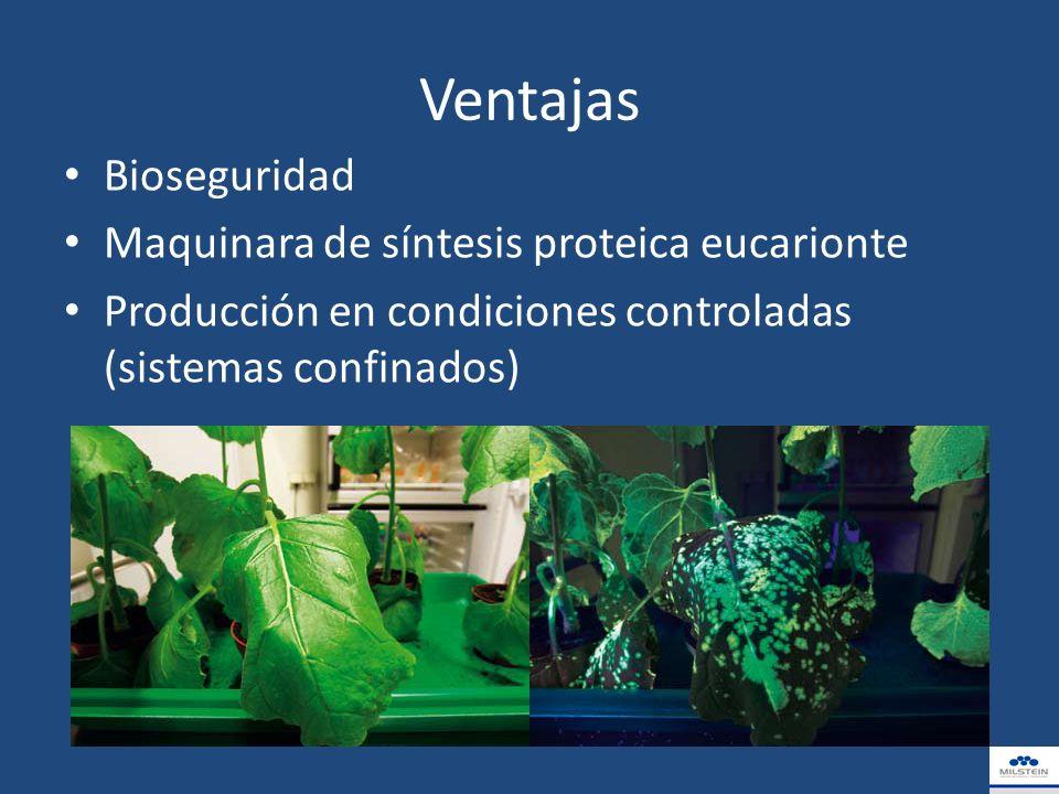 Ventajas Bioseguridad Maquinara de síntesis proteica eucarionte