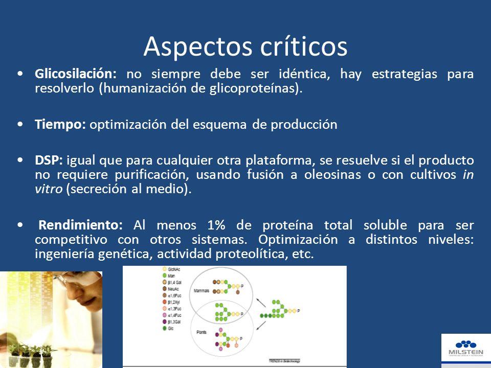 Aspectos críticos Glicosilación: no siempre debe ser idéntica, hay estrategias para resolverlo (humanización de glicoproteínas).