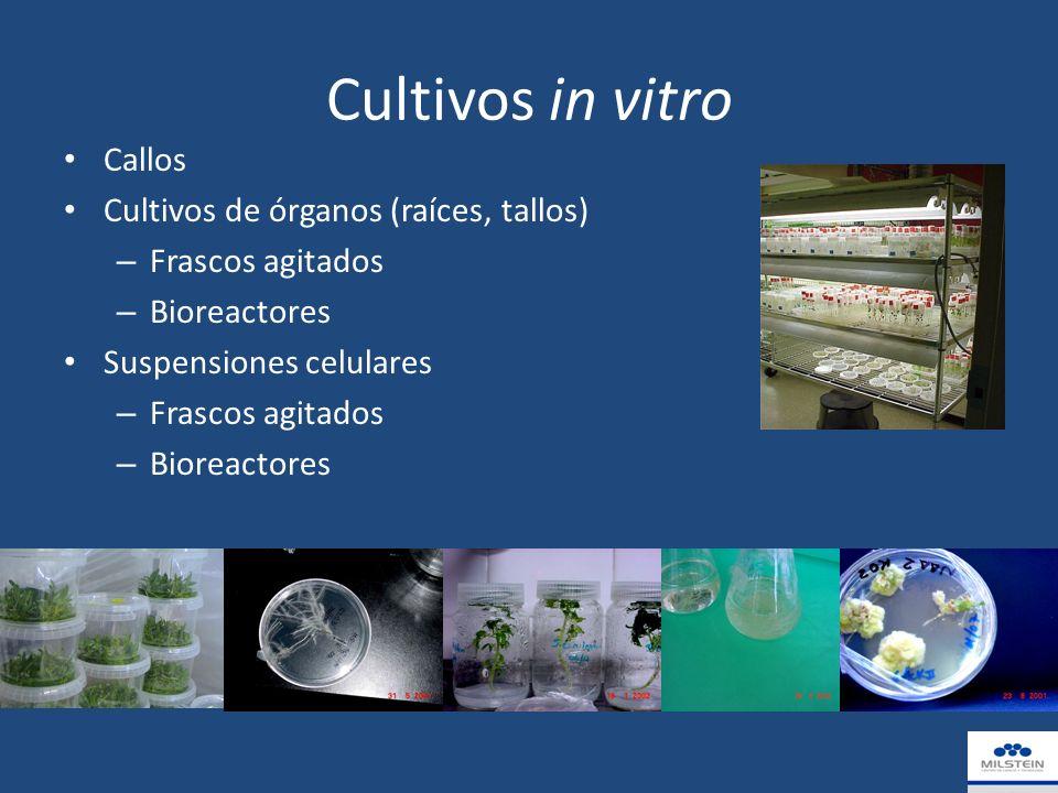 Cultivos in vitro Callos Cultivos de órganos (raíces, tallos)