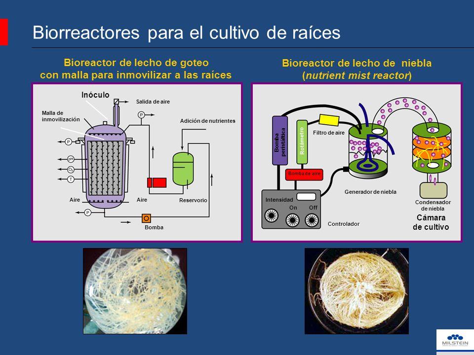 Biorreactores para el cultivo de raíces