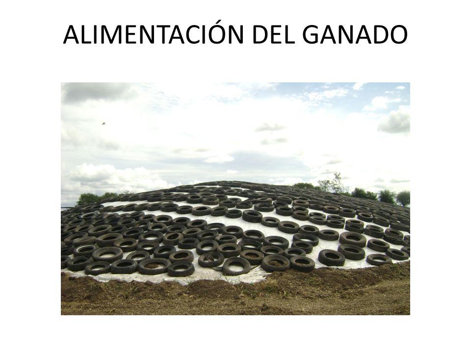 ALIMENTACIÓN DEL GANADO