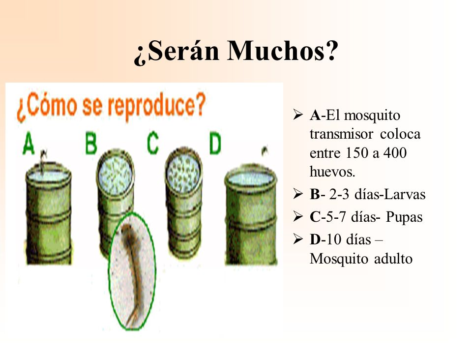 ¿Serán Muchos A-El mosquito transmisor coloca entre 150 a 400 huevos.