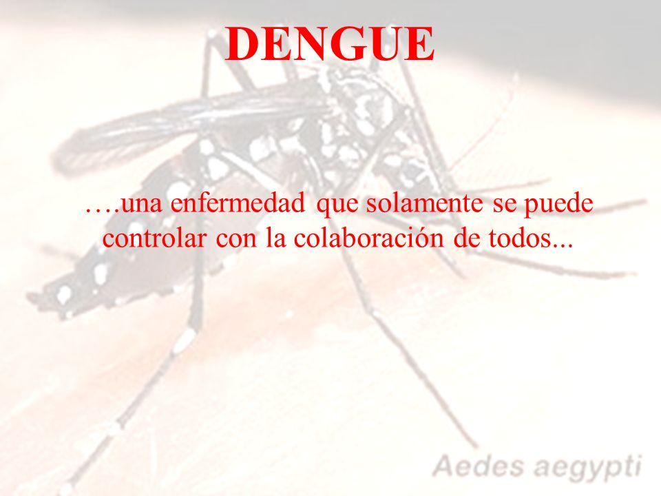 DENGUE ….una enfermedad que solamente se puede controlar con la colaboración de todos...