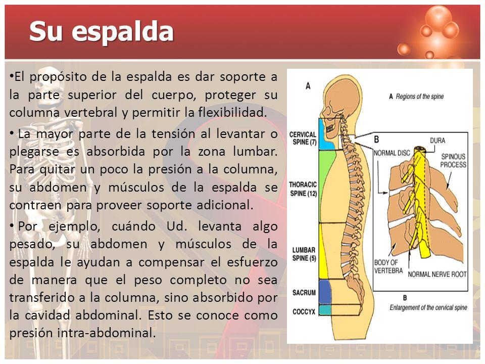 Su espalda El propósito de la espalda es dar soporte a la parte superior del cuerpo, proteger su columna vertebral y permitir la flexibilidad.